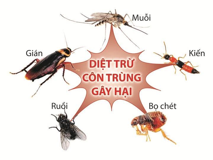 công ty diệt côn trùng